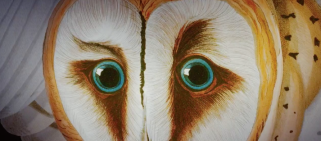 American Animals Bird Eyes